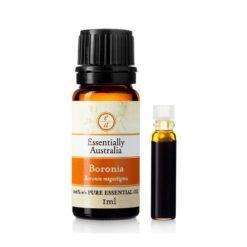 Boronia 100% Pure Absolute Oil 1ml - Essentially Australia