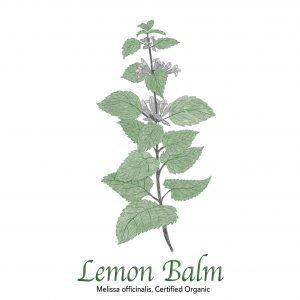 Lemon Balm Organic - The Herb Temple