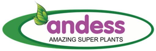 Andess Logo