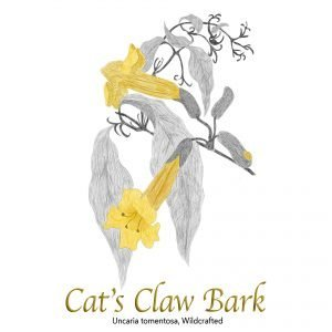 Cat's Claw Bark - The Herb Temple