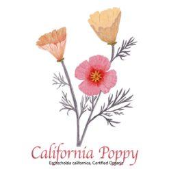California Poppy Organic - The Herb Temple