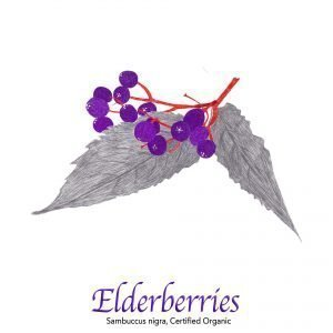 Elderberries - The Herb Temple