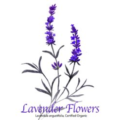 Lavender Flowers - The Herb Temple