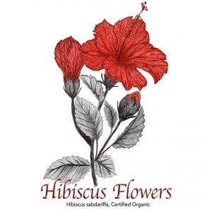 Hibiscus Flower - The Herb Temple