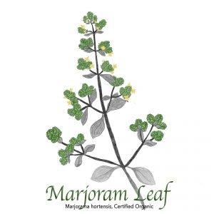Marjoram Leaf - The Herb Temple