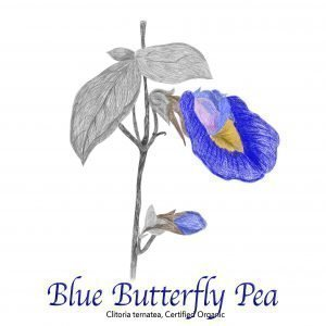 Blue Butterfly Pea Flower Organic - The Herb Temple