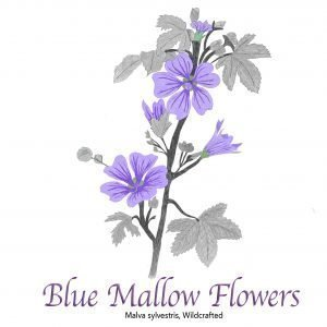 Blue Mallow Flowers - The Herb Temple