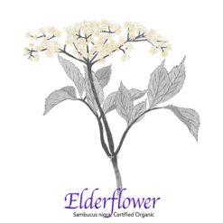 Elderflower Certified Organic