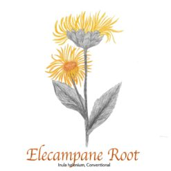 Elecampane Root - The Herb Temple