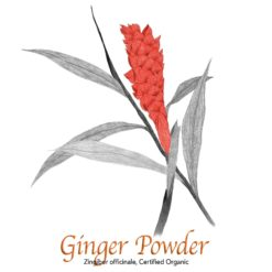 Ginger Powder Organic - The Herb Temple