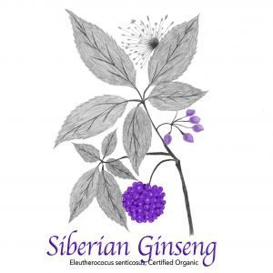 Siberian Ginseng - The Herb Temple