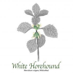 White Horehound - The Herb Temple