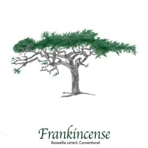 Frankincense Resin - The Herb Temple