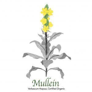 Mullein Organic - The Herb Temple