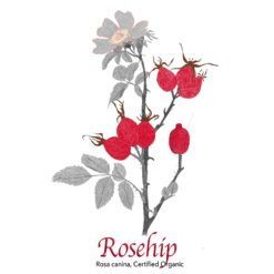 Rosehip - The Herb Temple