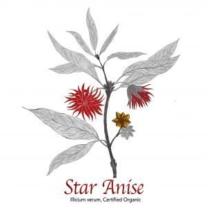 Star Anise The Herb Temple