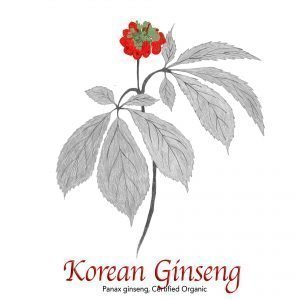 Korean Ginseng, Panax ginseng