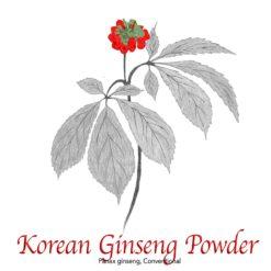 Korean Ginseng Panax Powder Conventional - The Herb Temple