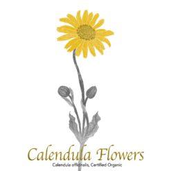 Calendula Flowers - The Herb Temple