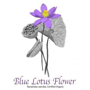 Blue Lotus Flower - The Herb Temple