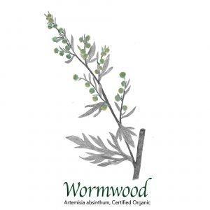 Wormwood Organic, Artemisia absinthium - The Herb Temple
