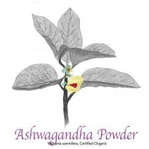 Ashwagandha Powder Organic - The Herb Temple