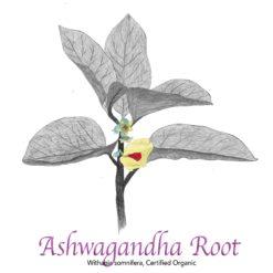Ashwagandha Root Organic - The Herb Temple