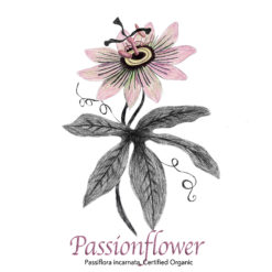 Passionflower Organic - The Herb Temple