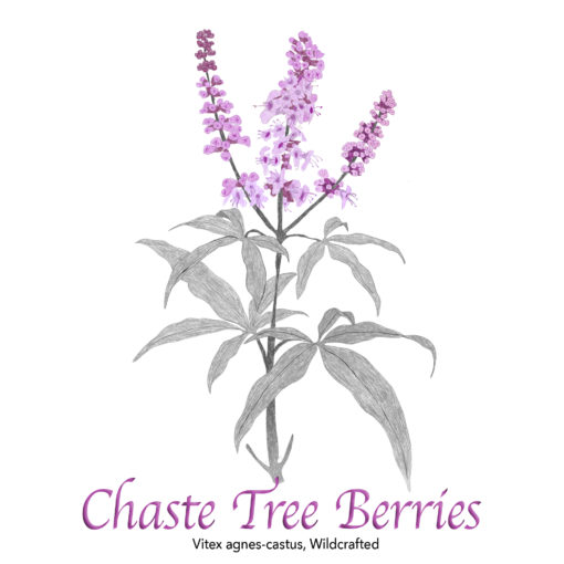 Chaste Tree Berries Wildcrafted - The Herb Temple